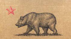 Nice California bear