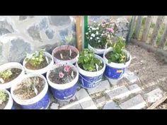 Plantas aromáticas y de jardín // Destacados // Plantación - YouTube