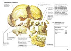 Atlas of the Body Anatomy, Artistic Anatomy