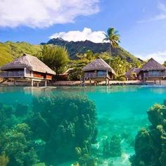 The island of Moorea is surrounded by crystal clear water & amazing beach bungalows. It's one of 130 islands in the French Polynesian island chain in the Pacific Ocean. Photo by: Mike Theiss ( Explore. Bora Bora, Moorea Island, Water Bungalow, Polynesian Islands, Beach Bungalows, All Nature, Tropical Paradise, Fhloston Paradise, French Polynesia