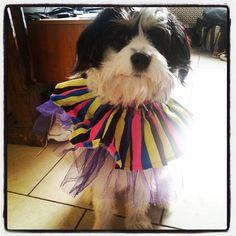 Lola klaar voor de carnaval 2014