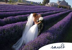sault-weddings-gallery #Daylesford