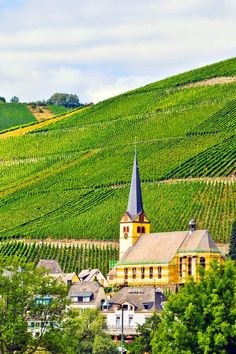 Mosel wine country, Germany: Biodiversity, new hiking trails and a castle stay. / #34 on @nytimes's list of 52 Places to Go in 2016 (Photo: Barbara Lee)