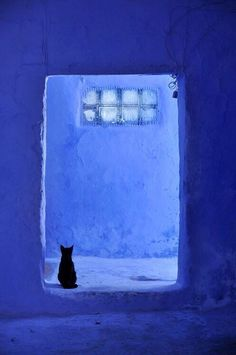 Chefchaouen, Morocco Love the composition of the photo and the color--like a lighter Yves Klein blue Le Grand Bleu, Jolie Photo, Blue Aesthetic, Something Blue, Crazy Cats, My Favorite Color, Cat Art, Shades Of Blue, Color Inspiration