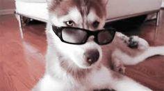 Resultado de imagen de fotos de perros
