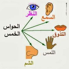 Here's how to decrease depression by using your good sense: put together a sensory coping toolbox to get you through tough spots. Teaching English, Learn English, Feeling Down, How Are You Feeling, Taste Sense, Sensory Details, Coping With Depression, Learning Arabic, Blog