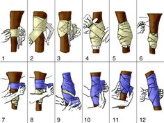 How to properly wrap the knee or hock joint - use animalintex and cohesive wrap . How to properly wrap the knee or hock joint - use animalintex and cohesive wrap don't need this now but you never know. My Horse, Horse Love, Horse Riding, Horse Camp, Horse Gear, Horses And Dogs, Show Horses, Horse Information, Horse Anatomy
