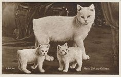 Manx Cat History Click the picture to read
