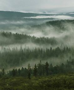 Summer in Saariselkä, Lapland, Finland. Misty forest