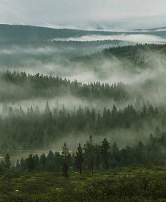 Summer in Saariselkä Lapland Finland. Dragonborn Skyrim, Departed Soul, Lake Garden, Lapland Finland, Nordic Tattoo, Misty Forest, Lappland, Summer Landscape, Aesthetic Pictures