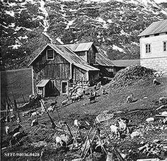Haug i Fardalen - Øvre Årdal