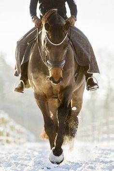 Horseback riding in the snow.