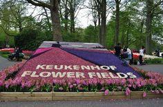 Keukenhof, na Holanda, Lisse - Painéis e mosaicos de flores