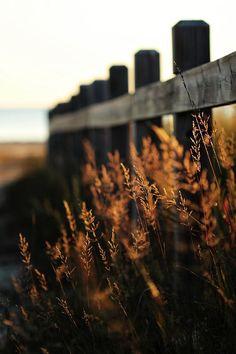 Wheat field, rail fence
