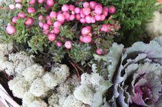 Karolinan puutarha. Karolinas trädgård. Karolina's garden.: Talvi kukka-astelmat. Blomsterarrangemang för vintern.