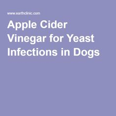 Earth Clinic readers report very good results when they used Apple Cider Vinegar for their dog's yeast infection issues. Yeast infections in dogs are What Causes Yeast Infections, Treat Yeast Infection, Yeast Infection Treatment, Apple Cider Vinegar Dogs, Apple Cider Vinegar Remedies, Yeast In Dogs Ears, Candida Yeast, Home Treatment, Healthy Oils