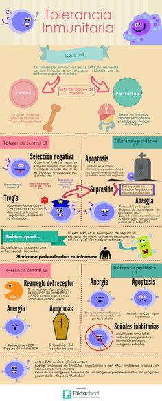 Tolerancia Inmunitaria #Infografía #Infographic