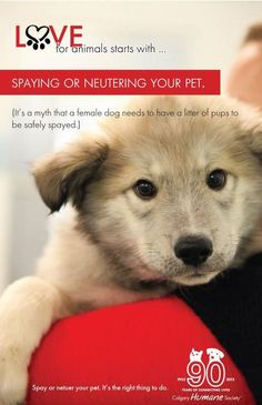 86 Best Spay/Neuter images in 2013 | Animal rescue, Animal