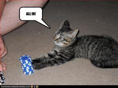 #gambling humor  #cats