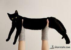 long cat :D