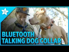 Overview | Phone-Activated Talking Dog Collar | Adafruit Learning System