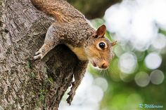 I Believe I Can Fly  #500px #squirrel #nature #photography