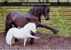 Really Funny Animal Pictures That Make You Cry With Laughter - 1