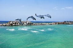 Swim with dolphins in Jamaica at Dolphin Cove in Ocho Rios or Negril.