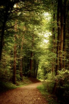 Forest Path, Tree Forest, Magic Forest, Beautiful Forest, Beautiful Places, Forest Bathing, Château Fort, Walk In The Woods, Nature Scenes