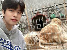 Stray Kids Seungmin, Kids Around The World, Boy Groups, Kpop, Puppies, Plastic Laundry Basket, Animals, Lamb, Lee Know