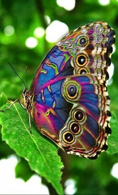 Colorful butterfly .... would be a cool tattoo