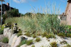 Die 78 Besten Bilder Von Garten Dünengarten Gräsergarten