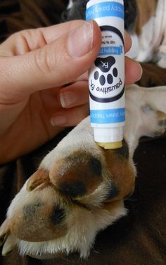 Review: Pawsitive FX All-Natural Balms and Wax for Dogs | Top Dog Tips