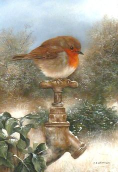 Robin painting by artist Carl Whitfield. Christmas Illustration, Illustration Art, Robin Bird, Christmas Bird, Kinds Of Birds, Christmas Paintings, Bird Drawings, Bird Pictures, Watercolor Bird