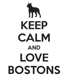Here is an image to boost the morale of the Boston Terrier lovers. Keep calm and love Bostons! http://www.bterrier.com/keep-calm-and-love-bostons/