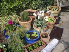 Gardening is great for stress relief and you don't need a big space. It's good because it gets you outside, is creative, good exercise and thinking time. And you can eat what you grow!