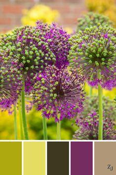ZJ Colour Palette 562 #colourpalette #colourinspiration