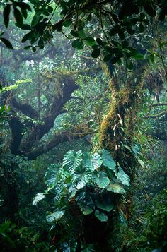 Monteverde Cloud Forest, Costa Rica - 15 of the world's wildest rainforests to trek Dark Green Aesthetic, Plant Aesthetic, Landscape Photography, Nature Photography, Images Esthétiques, Forest Art, Environment Concept Art, Tropical Garden, Wild Life