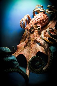 🔥 Polvo gigante do Pacífico Nature: NatureIsFuckingLit - Sea - Best Tattoo Share Underwater Creatures, Underwater Life, Ocean Creatures, Underwater Animals, Beautiful Creatures, Animals Beautiful, Octopus Photos, Octopus Images, Le Kraken