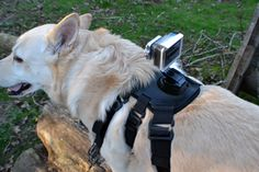 The GoProSupply.com Retrieve Extreme Dog Harness is a blast, live life through the eyes of your dog.