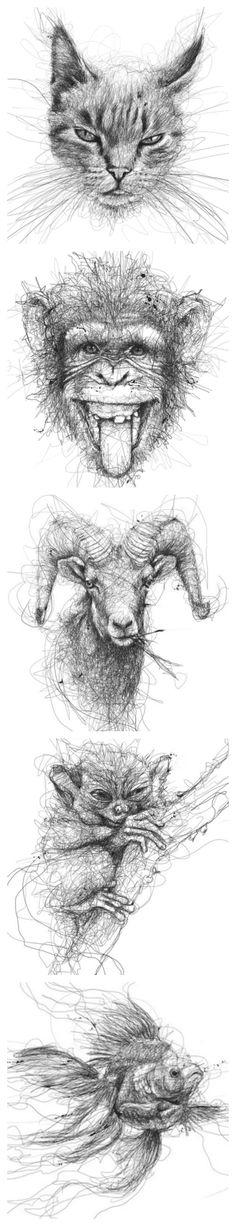 Animal Line Drawings by Vince Low