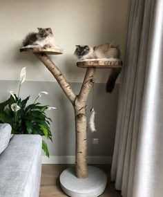 Scratching post for two cats sleeping lying down – kratzbaum Crazy Cat Lady, Crazy Cats, Porta Diy, Niche Chat, Diy Cat Tree, Cat Room, Pet Furniture, Office Furniture, Cat Sleeping