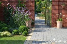 Wzdłuż ścieżki, jak po sznurku... - strona 4 - Forum ogrodnicze - Ogrodowisko