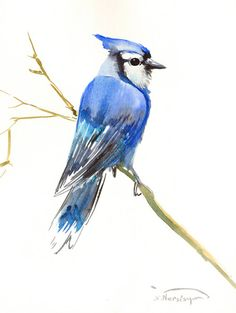 Blue Jay Painting, original watercolor 12 x 9 in, yard birds, blue bird wall art