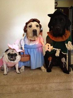 See 14 of the most adorable Halloween pet costumes
