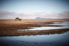 wrangel island - : Yahoo Image Search Results