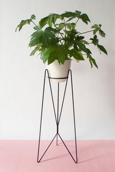 Bujnie: sposób na domową dżunglę - PLN Design