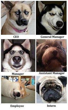 Hvordan Hunde forklare management ...