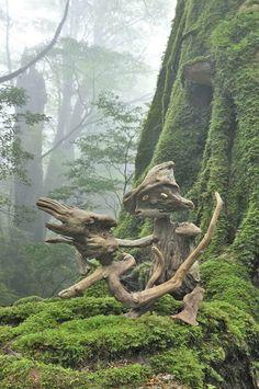 「流木の魂 森に帰る」 2-2010-06-24   #driftwood art object  #流木 #流木アート #流木オブジェ #屋久島アート