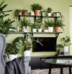 Un mini jardin sous forme de mur végétal dans le salon avec une série de plantes vertes sur étagères. #mur #végétal #étagère #plante #salon